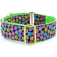 "Dog Collars:  Margaritas De Primavera 1.5"" Wide"