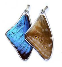 Jewelry:  Butterfly Blue Morpho Adonis Wing