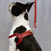 Choke Free Dog Harness for dogs under 15 lbs