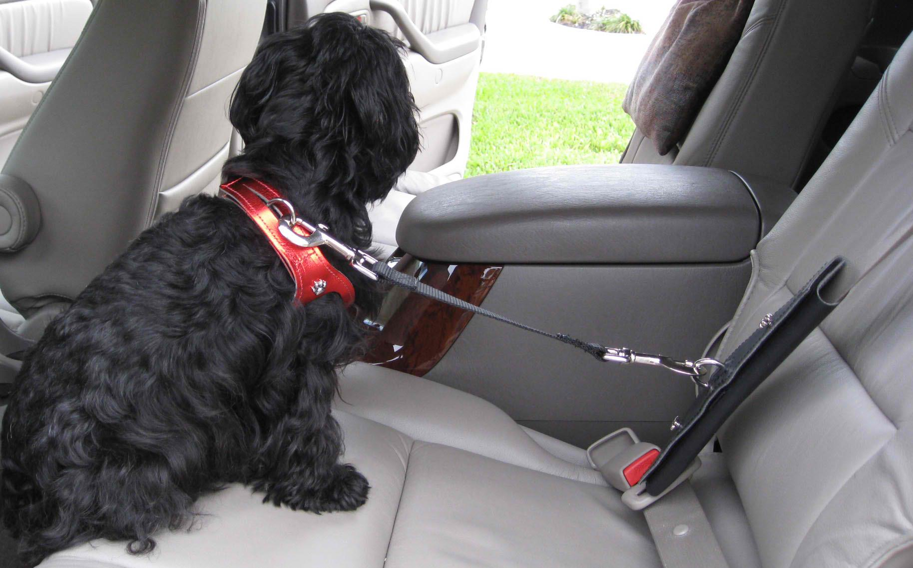 Car Safety Car Seat Belt Restraint on Dog Car Seat Belt Restraint
