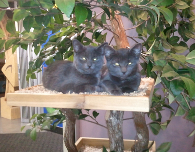 kitties in tree